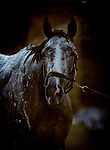April 26, 2021: Crazy Beautiful gets a bath at Churchill Downs in Louisville, Kentucky on April 26, 2021. EversEclipse Sportswire/CSM
