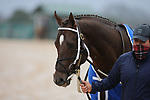 February 6, 2021: Strike Power before the running of the King Cotton Stakes at Oaklawn Racing Casino Resort in Hot Springs, Arkansas on February 6, 2021. Justin Manning/Eclipse Sportswire/CSM