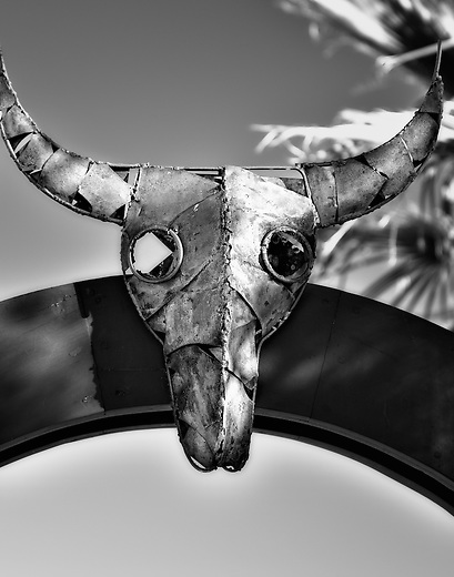 Black and white cow skull with horns