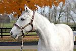 09 November  2009 Fasig TIpton November Breeding Stock sale.  Hip #97 Honey Ryder, consigned by Adena Springs.  A multiple Graded Stakes earner, and winner of over $2,700,000.