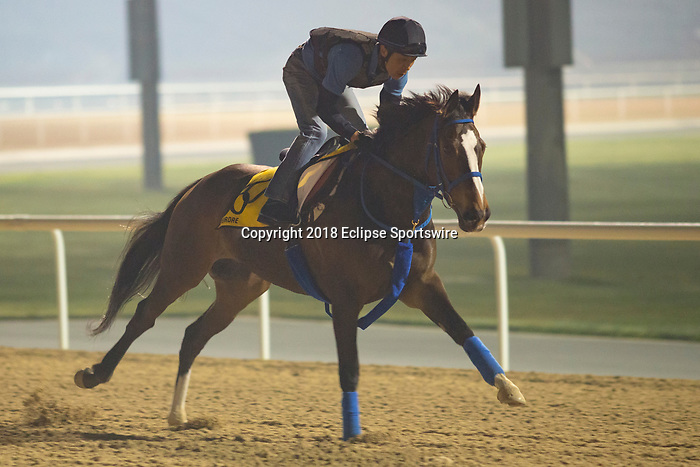 DUBAI,UNITED ARAB EMIRATES-MARCH 30: Deirdre,trained by Mitsuru Hashida,exercises in preparation for the Dubai Turf at Meydan Racecourse on March 30,2018 in Dubai,United Arab Emirates (Photo by Kaz Ishida/Eclipse Sportswire/Getty Images)