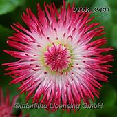 Gisela, FLOWERS, BLUMEN, FLORES, photos+++++,DTGK2481,#f#, EVERYDAY