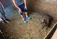 Children on a tour corner a baby wallaby to pet at the Outback Kangaroo Farm  in Arlington, Wash. on July 20, 2016. (photo © Karen Ducey Photography)