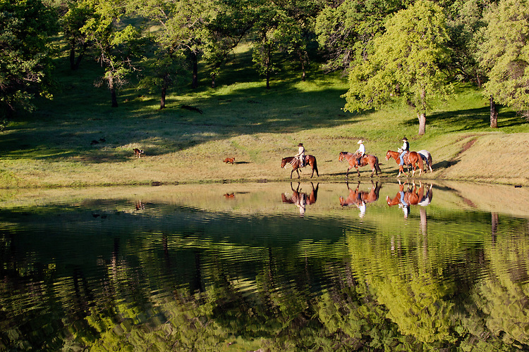 Ranch hand's on horseback riding beside a calm pond