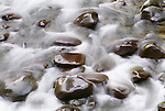 Polished River Rock, Sol Duc River, Olympic National Park, Washington, USA