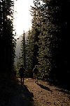 hikers on trail, subalpine forest, sunset, summer, July, Colorado State Forest,  Rocky Mountains, Colorado, USA
