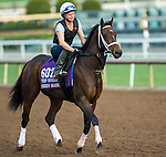 ARCADIA, CA - NOV 01: Green Mask, owned by Saeed Almaddah Abdullah and trained by Brad Cox, exercises in preparation for the Breeders' Cup Turf Sprint at Santa Anita Park on November 1, 2016 in Arcadia, California. (Photo by Kazushi Ishida/Eclipse Sportswire/Breeders Cup)