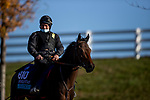 November 3, 2020: Go Athletico, trained by trainer Philippe Decouz, exercises in preparation for the Breeders' Cup Juvenile Turf at Keeneland Racetrack in Lexington, Kentucky on November 3, 2020. Alex Evers/Eclipse Sportswire/Breeders Cup