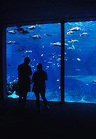 Two visitors view reef fish in large aquarium at Maui Ocean Center