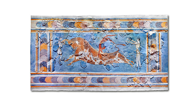The Minoan 'Bull leaping' fresco depicting an athlete leaping over a bulls back,  Knossos-Palace, 1600-1400 BC . Heraklion Archaeological Museum.,white background<br /> <br /> <br /> there are 3 participants, two white skinned women and one brown skinned man. One female athele is restraining the bull ny the horns to slow it down as the male athlete performs a backward summersault ober the bulls back. The second female athlete waits to catch the leaper.<br /> <br /> The fresco was found on the east side of the palace of Knossos together with fragments depicting different stages of bull leaping.