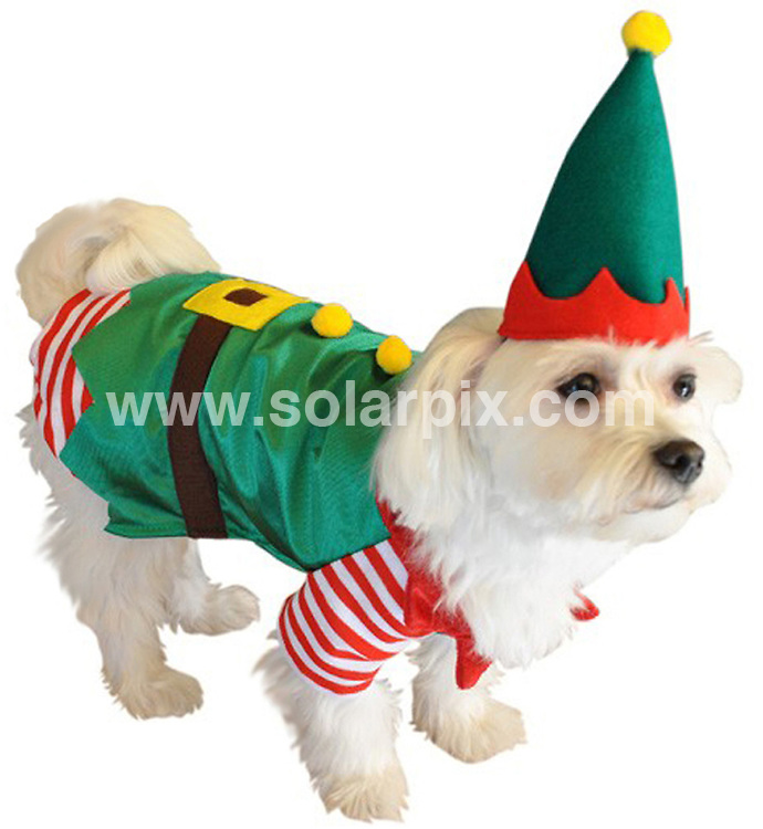 **ALL ROUND PICTURES FROM SOLARPIX.COM**                                             **NO UK NEWSPAPER PUBLICATION**.**UK MAGAZINE & SUPPLEMENT PUBLICATION ONLY** AND NO PUBLICATION IN AUSTRALIA, BELGIUM, FRANCE, GERMANY, ITALY, SCANDINAVIA AND USA**                                                                                  Caption: Despite the recession dog lovers are still happy to spend money on their pooches this year..With only a month until Christmas, US dog supply company Doggyvogue.com are currently stocking up on their range of seasonal outfits for dogs..The current collection includes a traditional Santa outfit as well as an angel, toy soldier and an elf..Proving the most popular costume this Christmas  is the Tartan holiday dress and the twinkling star sweaters.                                                                               This pic: Xmas Dogs                                                                                             JOB REF:14249        SFE       DATE: 25.11.2011                                                           **MUST CREDIT SOLARPIX.COM OR DOUBLE FEE WILL BE CHARGED**                                                                      **MUST AGREE FEE BEFORE ONLINE USAGE**                               **CALL US ON: +34 952 811 768 or LOW RATE FROM UK 0844 617 7637**