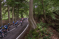 descending through the forest<br /> <br /> Ster ZLM Tour (2.1)<br /> Stage 4: Hotel Verviers > La Gileppe (Jalhay)(190km)