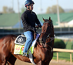 April 20, 2014 Medal Count, trained by Dale Romans, gallops at Churchill Downs.  He is owned by Spendthrift Farm and recently finished second in the Blue Grass Stakes.