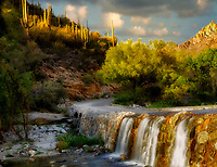 Road in Sabino Canyon with Palo Verde tree in bloom and waterfall. Arizona