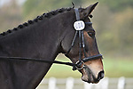 Stapleford Abbotts. United Kingdom. 08 November 2019. Class 2. British Dressage. Brook Farm training centre. Stapleford Abbotts. Essex. United Kingdom. Credit Garry Bowden/Sport in Pictures.~ 08/11/2019.  MANDATORY Credit Garry Bowden/SIP photo agency - NO UNAUTHORISED USE - 07837 394578