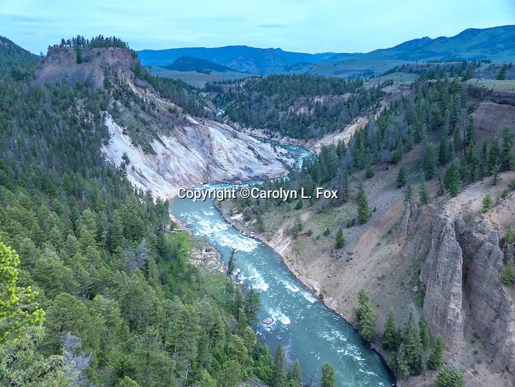 The Lamar River runs through Yellowstone.