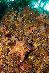 A typical rock & kelp scene at Astrolabe Reef