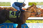 13 March 2010:  Jessica Is Back and Elvis Trujillo winning the Ocala Stakes at Gulfstream Park in Hallandale Beach, FL.