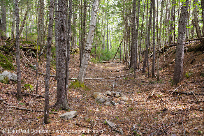 """The abandoned railroad bed of the East Branch & Lincoln Railroad (1893-1948) in the Thoreau Falls Valley of the Pemigewasset Wilderness in Lincoln, New Hampshire. This section of railroad is near the site of """"New"""" Camp 22 along the North Fork Branch of the railroad."""