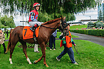 Less Than Perfect(7) with Jockey Taylor B. Rice aboard before the Summer Stakes at Woodbine Race Course in Toronto, Canada on September 13, 2014 with Jockey Patrick Husbands aboard.
