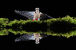 Wildlife reflected in a shallow pool in Winchester by Will Hall
