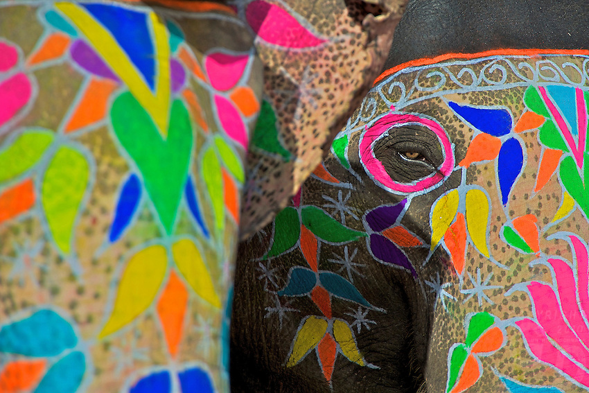 The Eye of the Elephant. Festival Jaipur Rajasthan India
