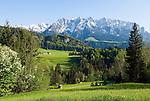 Austria, Tyrol, near Walchsee: flower meadow, springtime at Kaiserwinkl region with Kaiser mountains, Zahmer Kaiser mountain