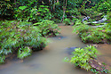 Tributary of the Maliau River flanked with Riverine Fern {Dipteris lobbiana}. Souhern Plateau of Maliau Basin, Sabah's 'Lost World', Borneo.