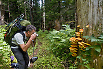 Hiker, Little Beaver trail, Fungus, chicken of the woods, Laetiporous, Polyphorus sulphureus, mushroom, North Cascades National Park, wilderness, old growth forest,  Ross Lake National Recreation Area, Cascade Mountains, Washington State, USA, North America, Scott McCredie, released.Pacific Northwest,