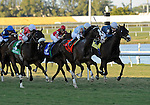 10 February 20: Courageous Cat (no. 7), ridden by Garrett Gomez and trained by Bill Mott, wins the 44th running of the grade 3 Canadian Turf Stakes for four year olds and upward at Gulfstream Park in Hallendale Beach, Florida.