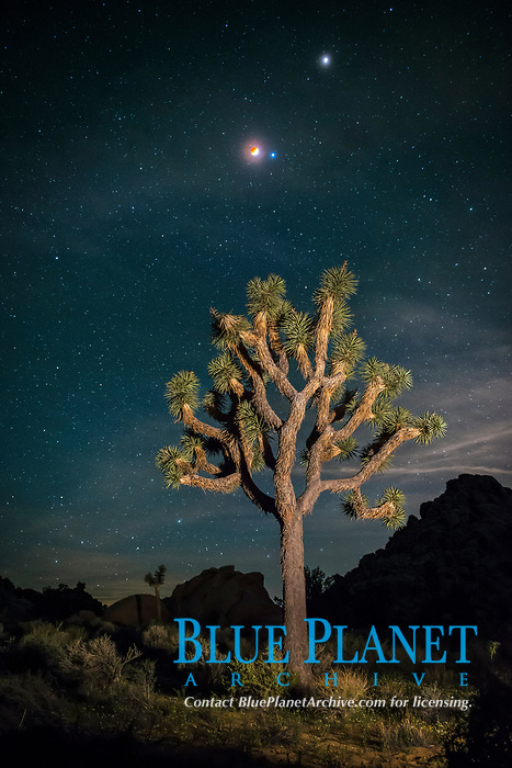 Full lunar eclipse, blood red moon, with blue star Spica (right of moon) and planet Mars (top right), over Joshua Tree National Park, California, USA, April 14/15, 2014,