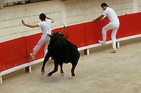 Europe/France/Languedoc-Roussillon/30/Gard/Beaucaire : Course camarguaise