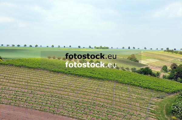 Blick über Weinberge und Felder auf eine Alleenstraße im Frühjahr