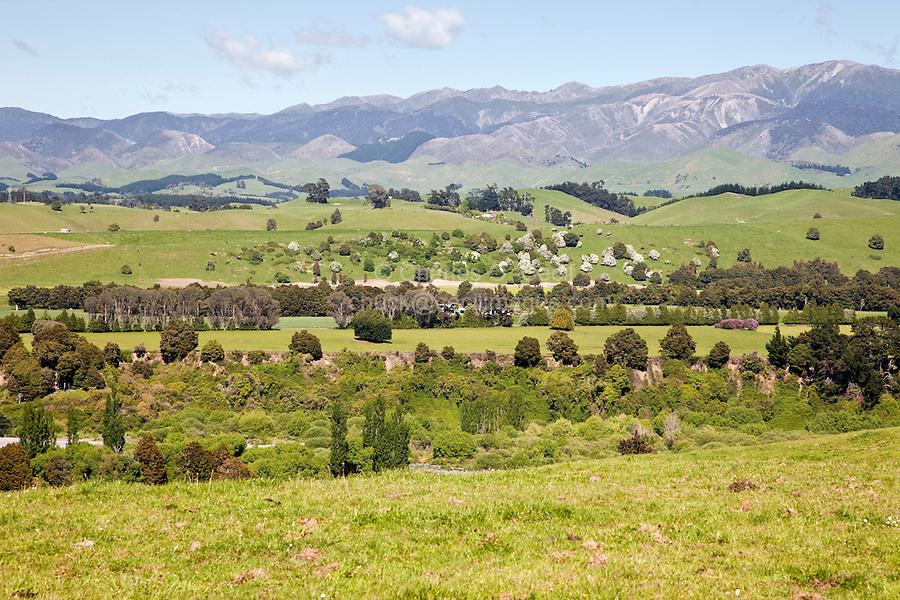 Farmland, looking toward Ruahine Range south of Napier, near Titokino, from Highway 2, north island, Hawke's Bay, New Zealand.