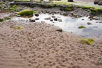 Lugworm, Arenicola marina, casts on the beach at Robin Hoods Bay, North Yorkshire.