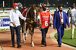 March 27 2021: HYPOTHETICAL (IRE) #6, in the post parade for the Dubai World Cup at Meydan Racecourse, Dubai, UAE. Shamela Hanley/Eclipse Sportswire/CSM