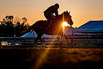 May 15, 2019 : A horse exercises on the track as horses prepare for Preakness Week at Pimlico Race Course in Baltimore, Maryland. Scott Serio/Eclipse Sportswire/CSM