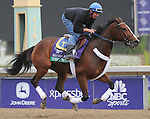 Strike The Moon, trained by Michael Trombetta, exercises in preparation for the upcoming Breeders Cup at Santa Anita Park on November 1, 2012.