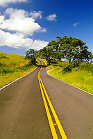 Kula Highway on the slopes of dormant Haleakala volcano, Upcountry Maui. Concepts: freedom, exploring, possibilities, endless
