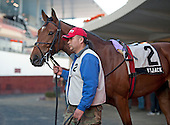 Favored Vyjack in the paddock before the $200,000 Jerome.