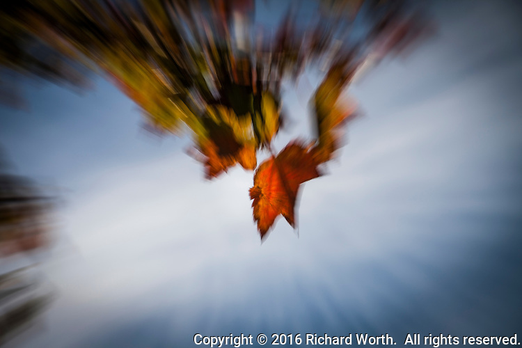 Autumn leaves appear to be in motion in an abstract created through camera technique.