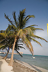 Palm trees on the beach at Ramon's Village Resort in San Pedro, Ambergris Caye, Belize