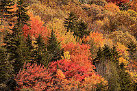 The North Carolina mountains (Blue Ridge Parkway) was a tapestry of brilliant oranges, reds and yellows as the leaves turned color during autumn 2009. The Blue Ridge Mountains are a popular spot for travelers, tourists and visitors seeking beautiful vistas of fall leaf foliage. One particularly striking spot (shown here) is at Grandfather Mountain near Linville, NC.  Grandfather Mountain is about two hours from Charlotte.