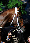 09 July 30: Louisvilleluminary prior to the 95th running of the grade 2 Sanford Stakes for two year olds at Saratoga Race Track in Saratoga Springs, New York.