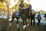 ARCADIA, CA  OCTOBER 30: Breeders' Cup Turf entrant Bandua, trained by Jack Sisterson, heads back to the barn after his workout at Santa Anita Park in Arcadia, California on October 30, 2019. (Photo by Casey Phillips/Eclipse Sportswire/CSM)