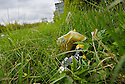 DISCARDED LITTER AT THE SIDE OF  THE B822 TOWARDS FINTRY.