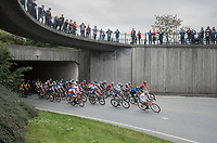 in the last lap, the peloton is all together again... bunch sprint more&more lickely at this point<br /> <br /> Men Elite Road Race<br /> <br /> UCI 2017 Road World Championships - Bergen/Norway