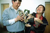 China. Province of Heilongjiang. Harbin. Siberia Tiger Park. The park's coach and his interpreter hold in thier arms two  baby tigers, born 10 days ago. © 2004 Didier Ruef