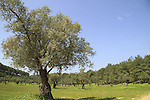 Forests of Israel