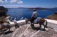 Muli auf dem Weg von Fira zum Hafen zum Transport der fussfaulen Touristen, Insel Santorin (Santorini), Griechenland, Europa